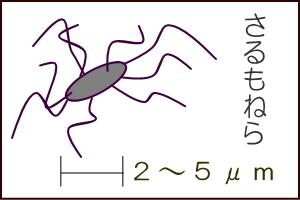 サルモネラ - 福島県ホームペー...
