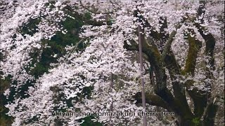 """Peace and a smile"" A glimpse of seasons in Ken-poku District(northern part of Fukushima Prefecture"