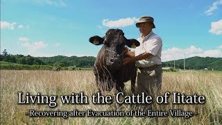 Living with the Cattle of Iitate - Recovering after Evacuation of the Entire Village -