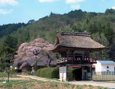 南泉寺のしだれ桜 - 福島県ホー...